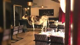 De koe in het restaurant (foto: Herberg de Brabantse Kluis).