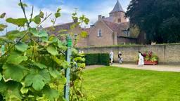 Wijngaard Sint-Catarinadal redelijk ongeschonden door de late vorst.