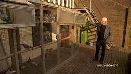 De duivenliefhebber uit Made waar 24 top duiven gestolen zijn. (FOTO: Bureau Brabant)