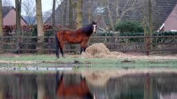 Foto ter illustratie, niet het bewuste paard uit het verhaal (archieffoto).