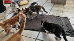 Katten zoeken verkoeling op een natte handdoek (foto: Angela Frijters)