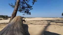Het is rustig bij de Loonse en Drunense Duinen (foto: Dirk Verhoeven).
