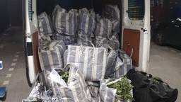In de bestelauto in Sint Willebrord lag meer dan 200 kilo hennep (foto: Politie.nl).