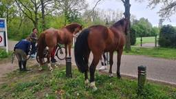 De vermiste paarden zijn terecht (foto: Manege Meulendijks/Facebook).