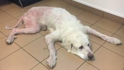 Verwaarloosde hond uit huis in Zundert gehaald (Foto: Landelijke Inspectiedienst Dierenbescherming).