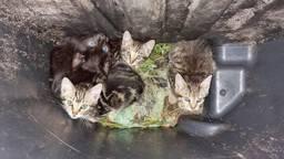 De vier kittens zaten gevangen in de kliko (foto: @dierenambulancebrabantnoord/Facebook).