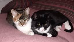 Kat Felix rechts op de foto naast zijn zusje Fleur.