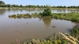 Het hoogwater in de Biesbosch levert prachtige plaatjes op