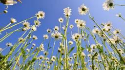 bloemen foto Ben Saanen