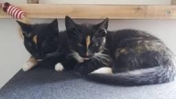 Inmiddels zijn de kinderen van Theo dolgelukkig met hun nieuwe kittens.