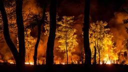 De Peel in brand (foto: Rob Engelaar).