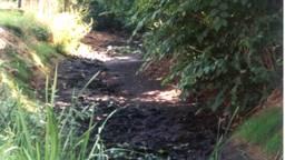 Een drooggevallen sloot (foto: Waterschap Aa en Maas)