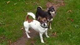 Hondjes op het uitlaatveldje aan de Ringbaan-Zuid in Tilburg