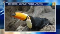 Een van de zeldzame vogels die werd meegenomen bij AvifaunaEen van de zeldzame vogels die werd meegenomen bij Avifauna