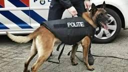 De politiehond beet van zich af. (Archieffoto)