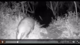 Das gesnapt door een camera-val in de Biesbosch