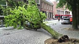 De omgevallen boom op de Parade (foto: Bart Meesters/Meesters MultiMedia).