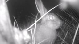 Natuurbruggen veranderen 's nachts in een uitgaansgebied voor dieren
