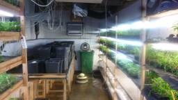 Een opgerolde kwekerij in Wagenberg