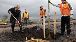 De eerste bomen gaan de grond in (foto: ANP)