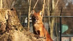 Foto: J. de Greef / Zie-Zoo
