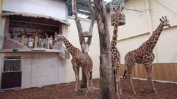 Bron: ZooParc Overloon