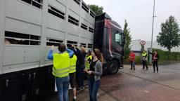'Varkensknuffelaars' demonsteren bij varkenslachterij in Boxtel