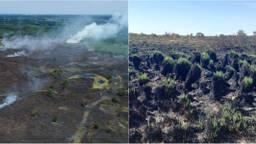 Het natuurgebied in juli (links) en hetzelfde gebied in augustus.