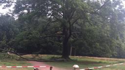 De zieke boom