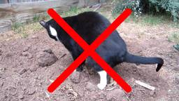 Verbod op loslopende en poepende katten in Tilburg