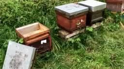 De honing uit de bijenkasten is meegenomen. Foto: Boswachter Arie