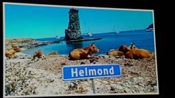 Op de winnende foto staan koeien uit Corsica