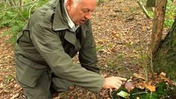 Boswachter Frans: 'De'ze kastanjeboleet kun je eten'