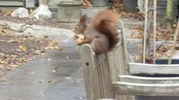 Een eekhoorn.