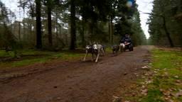Sledehondenwedstrijd in Landhorst