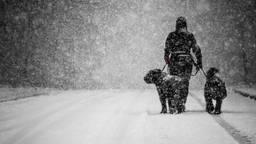 Een hond en zijn baasje trotseren de sneeuw. (Foto: Rob Engelaar/Infocus Media)