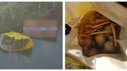 De politie vond de mortierbommen in een boodschappentas en in een kartonnen doos. (Foto: Politieteam Weerijs)