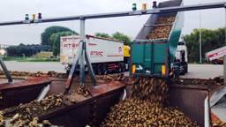 Het lossen van suikerbieten (Foto:Raoul Cartens)