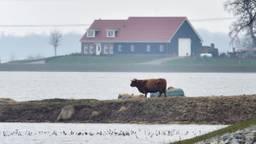 Veel dieren hebben last van het hoogwater (Foto: Erland van der Aa).