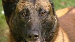 Deze hond is niet een van de dieren die zijn ingeslapen. (Archieffoto)