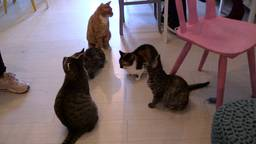 De katten in café Mispoes zijn al geregistreerd.