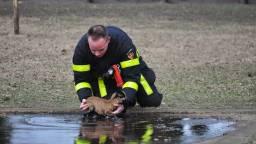 De brandweerman redde het dier uit het ijskoude water. (Foto: Persbureau Midden Brabant)
