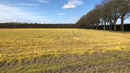 Geel veld in het buitengebied van Deurne.