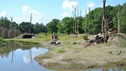 Het nieuwe gorilla-eiland. (foto: Beekse Bergen)
