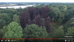 Dronebeelden van het Liesbos in Breda. Foto: YouTube.