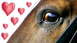 Berijders paarden kunnen via site nieuwe liefde vinden