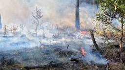 Een flink stuk bos staat in brand. (Foto: Toby de Kort)