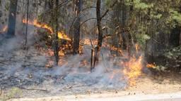 De bosbrand bij Budel. Foto: Harm van Leuken/SQ Vision Mediaprodukties
