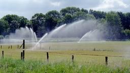 Het grasland mag voorlopig niet beregend worden (Foto: Waterschap Brabantse Delta).
