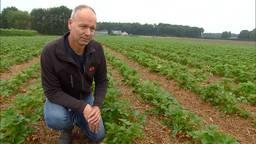 Mark van Aert uit Zundert bij zijn veel te kleine aardbeienplanten.